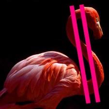 Pink_flamingo
